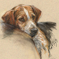 'Beagle'- pet portrait, 30x40 cm, pastel painting €750