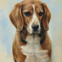 'Beagle'-Noa, 30x40 cm, oil painting (sold/commission)