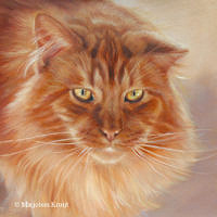 'Maine coon'- Bobbie, 30x30 cm, oil painting (sold/commission)