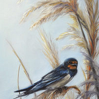 'Barn swallow', 20x30 cm, oil painting (sold)