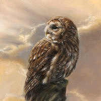 'Evening glory'- Tawny owl, 30x40 cm, oil painting (sold)