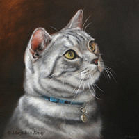 'European shorthair' -portrait, 30x30 cm, oil (sold/commission)