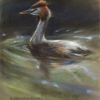 'Great crested grebe', 22x22 cm, pastel painting (for sale)