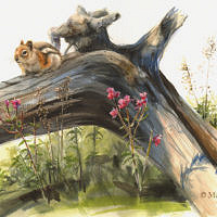 'Golden-mantled ground squirrel', 50x35 cm, watercolor (for sale)