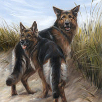 'Shepherd dogs', 50x60 cm, oil painting (sold/commission)