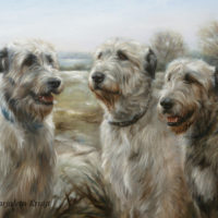 'Irish Wolfhounds', 80x60 cm, oil painting (sold/commission)