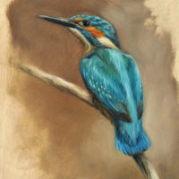 'Kingfisher', 18x24 cm, oil painting (sold)