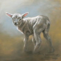'Lamb', 25x25 cm, oil painting (sold)