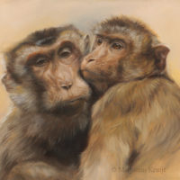 'Best friends'-Rhesus macaques, 40x30 cm, oil (for sale)
