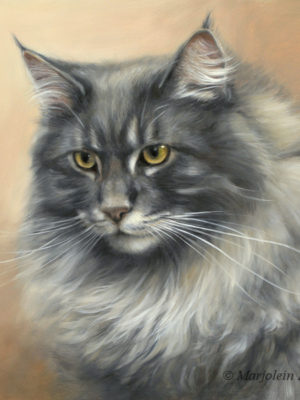 'Maine coon'-Carlos, 30x30 cm, oil painting (sold/commission)