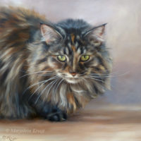 'Maine coon'-Floortje, 30x30 cm, oil painting (sold/commission)