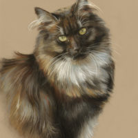 'Norwegian forest cat', 20x30 cm, pastel painting (sold/commission