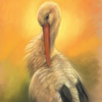 'Sunlit Stork', 30x40 cm, pastel painting (for sale)