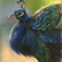 'Peacock', 24x34 cm, pastel painting (for sale)