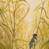 'Morning song'- Reed bunting, 30x60 cm, oil painting (for sale)