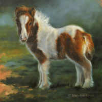 'Miniature shetland pony foal', 25x25 cm, oil painting (sold)