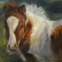 'Miniature shetland pony foal', 24x18 cm, oil painting (NFS)