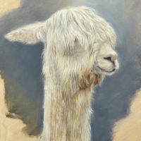 'Alpaca', 24x30 cm, oil painting (for sale)
