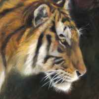 'Tiger study', 18x24 cm, oil painting (for sale)