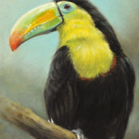'Keel-billed toucan', 13x18 cm, oil painting (for sale)