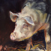 'Pig', 20x20 cm, oil painting (for sale)