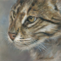 'Fishing cat', 30x24 cm, oil painting (for sale)