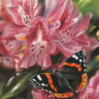 'Red Admiral', 13x18 cm, oil painting (sold)