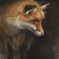 'Fox', 16x20 cm, pastel painting (sold)