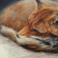 'Sleeping fox', 30x24 cm, oil painting (sold)