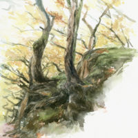 'Trees on rocks' -Yorkshire, 30 x 35 cm, watercolor,(for sale)