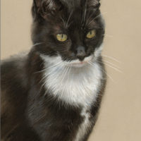 'Black cat', 20x30 cm, pastel painting (sold/commission)