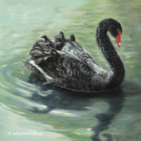 'Gracious'-Black swan, 40x40 cm, oil painting (for sale)