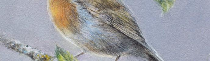 Painting of a robin by bird artist Marjolein Kruijt