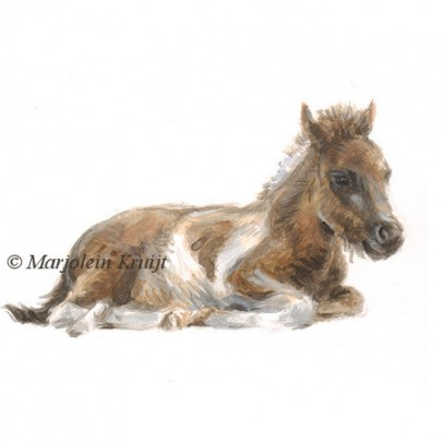 Foal illustration by Marjolein Kruijt