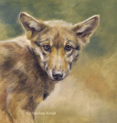 'Jonge wolf', 20x20 cm, olieverf schilderij (verkocht)