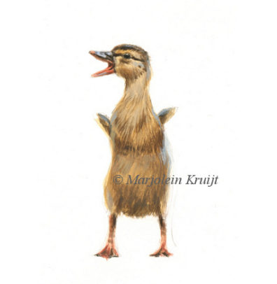 Duckling illustration, 12x10 cm, €110