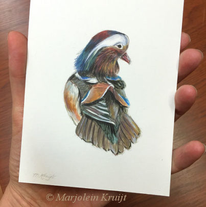 Mandarin Duck bird illustration by Marjolein Kruijt €100 (for sale)