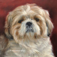 'Shih tzu', 25x25 cm, oil painting (sold/commission)