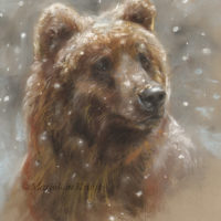 'Snowy bear', 28x24 cm, pastel € 580 excl. frame