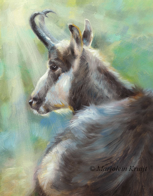 'Chamois', 18x13 cm, oil painting (for sale)