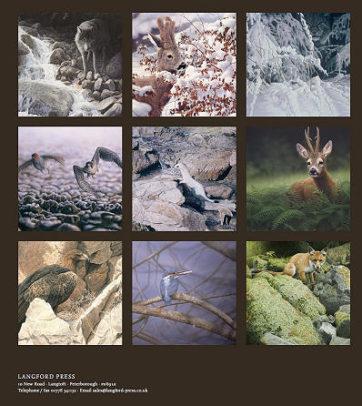 boek-wild-in-europa-renso-tamse-wildlife-kunstenaar-achterkant