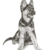 'Shepherd dog puppy', 30x24 cm, pencil drawing (sold/commission)