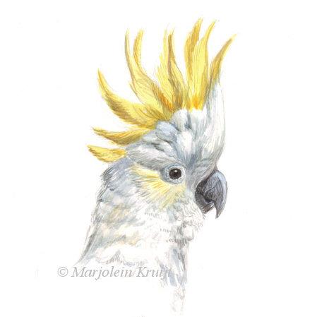'Yellow-crested cockatoo', acrylics, 15x10 cm, Marjolein Kruijt €100