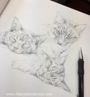 Pet portrait sketch in pencil by animal artist Marjolein Kruijt