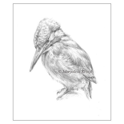 Kingfisher drawing in pencil (for sale)