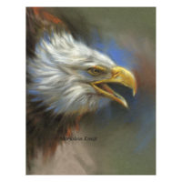 'American bald eagle', pastel painting (for sale)