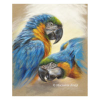 'Blue yellow maccaws', pastel painting (for sale)