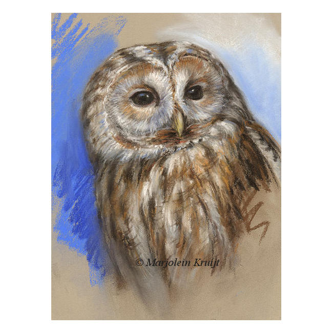 'Tawny owl ', pastel painting (for sale)