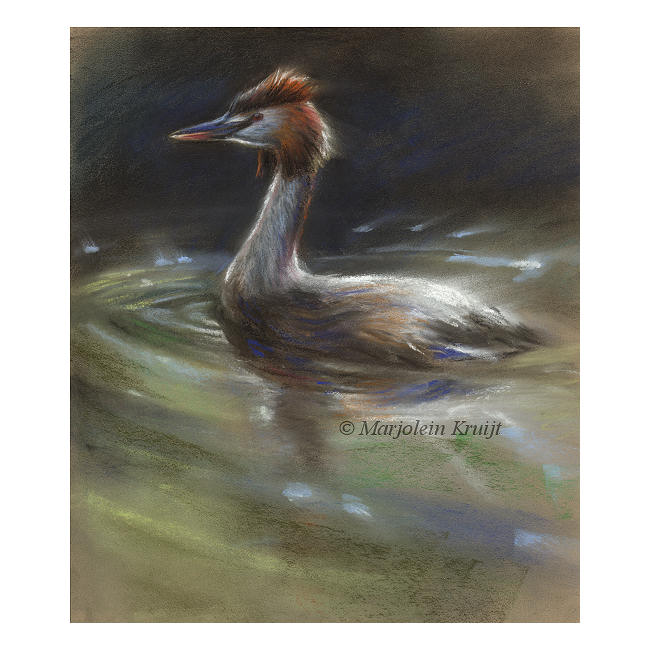 'Great crested grebe', pastel painting (for sale)