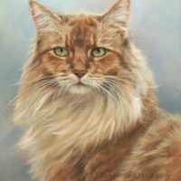 'Somali' cat, 30x24 cm, oil on canvas (sold/commission)